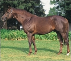 New Stallions In KZN For 2012 Breeding Season </i>