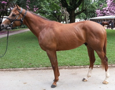 First Winner For Sire Al Miqdaam