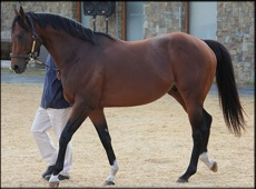 Brave Tin Soldier(USA) - Summerhill Stud