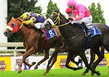 Spiced Gold winning the Gr 1 SA Fillies Classic, bred by Greenhill Farm. Image: JC Photos