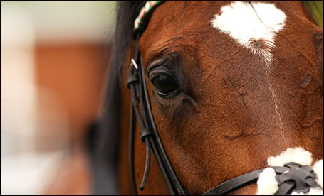 Will Frankel Make It 14 Out Of 14 On Saturday?
