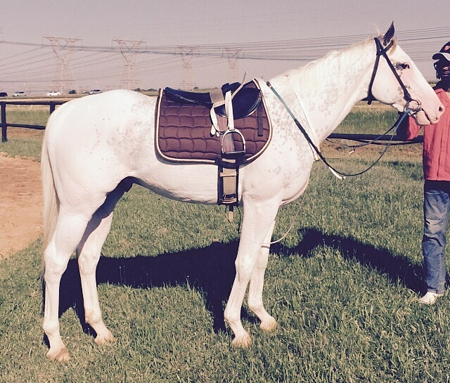 Gran Blanco in training with Robbie Sage. Image: Rathmor Stud