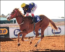 Gypsy Fair, winning her race at Flamingo Park. She is by Newton, standing at Bush Hill Stud. Image: JC Photos