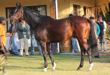 First South African Winner For Daring Bid(USA)