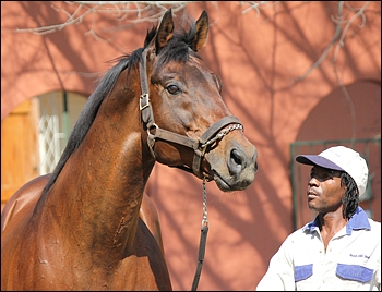 Festival Of Fire Wins Gr 3 At Turffontein