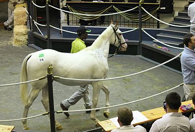 Rathmor's Gran Blanco Sold At Nationals
