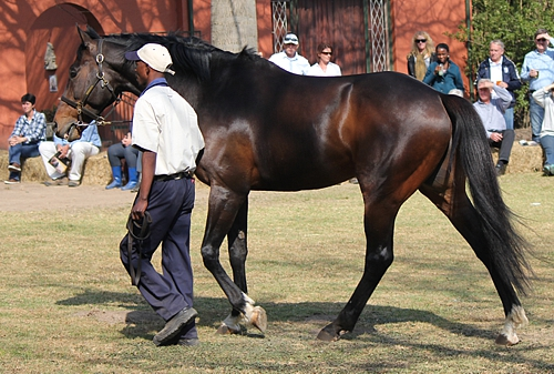 Irish Flame's Full-Sisters Achieve Double At Durbanville