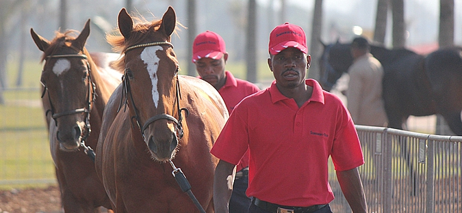 2013 Suncoast KZN Yearling Sale Catalogue Launched