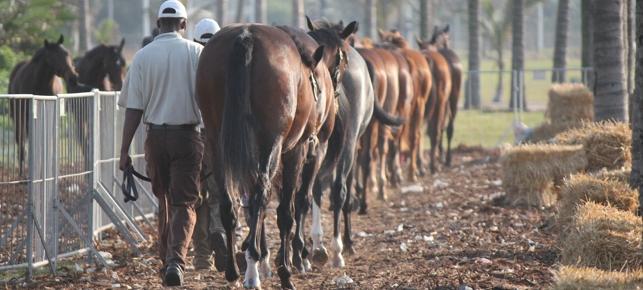 KZN Yearling Sale Million 2014 - Qualifying Horses