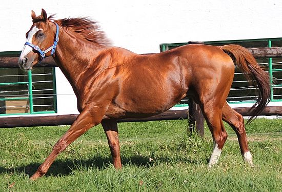Byword(GB) First Mares Confirmed In Foal