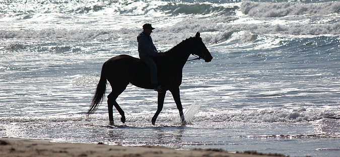 Rhys taking Winter Wizard into the sea. The horse loved it. Photo: Candiese Marnewick