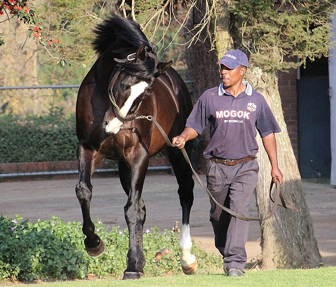 Mogok Dominates KZN Breeders Million Mile Field