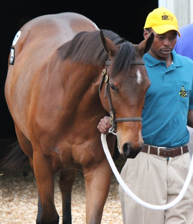 Exciting Young KZN Sires - First Runners First Places