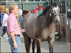 Keith Russon of Backworth with his grey Mogok colt, Luxardo, who sold for R200 000, bought by top Vendors of the sale VIP Thoroughbreds (Dubai)