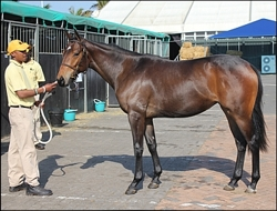 Yellow Star Stud's Silvano filly, Lady Silvia, top-priced KZN-bred. The filly sold for R200 000. Image:  Candiese Marnewick