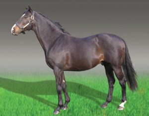 Miesque. Image: http://thevaulthorseracing.wordpress.com/2011/08/11/great-euro-fillies-part-two-goldikova-and-miesque
