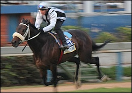 FINAL FIELD FOR VODACOM DURBAN JULY