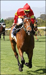 Super Saturday At Greyville, Including Ladbrokes Gold Cup Grade 1