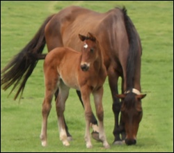 Strategic News(AUS) Foals at Rathmor Stud