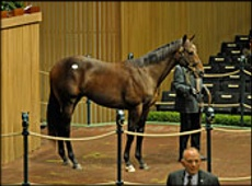 Two Yearlings Sell For Over A Million Dollars At Keeneland