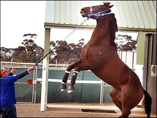 Black Caviar Resting While Future Decided
