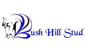 www.bushhillstud.co.za