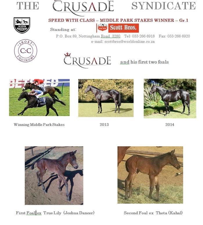 Crusade(USA) First Foals