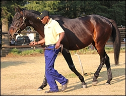 Yellow Star Stud Stallion Day 2012