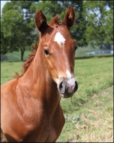 Beautiful 2011 colt out of Emperor's Dance, by Jam Alley(AUS)