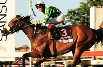 Dancewiththedevil, bred, owned and trained by St John Gray. Image: sportingpost.co.za