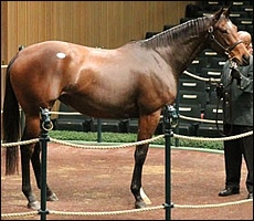 Dreamtheimpossible, by Giant's Causeway, sold in foal to Galileo. Image: Bloodhorse.com