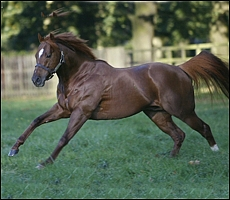 Sire Dutch Art, producing the goods at stud. He is a half-brother to Up. Image: Google Images