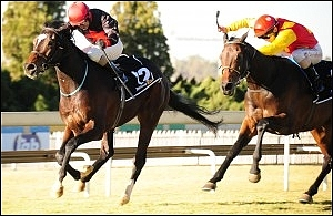 Eton Square, nominated for the Vodacom Durban July this year. Image: Sportingpost.co.za.