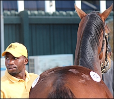 Gauntlet at the 2011 Suncoast KZN Yearling Sale. Image: Candiese Marnewick/MMVII