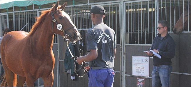 Behind The Scenes At The 2012 Suncoast KZN Yearling Sale
