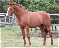 Stallion Feature: Jam Alley(AUS)