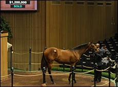 Bernadini Filly Sells For $1.2 million At Keeneland