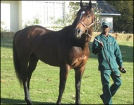 Stallion Feature: Just As Well(USA)
