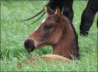 New Foals From Bush Hill Stud