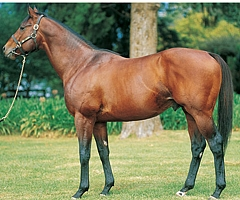 Kahal to stand at Bush Hill Stud