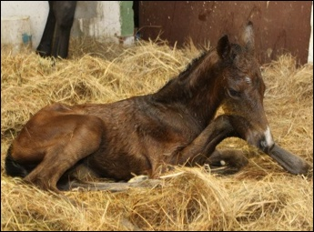 New Foals From Far End Stables