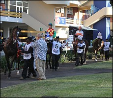 Parade ring, prior to the running of the Million Mile. Image: Candiese Marnewick