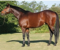 Malhub to stand at Bush Hill Stud