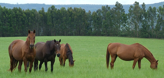 Mares at Greenhill Farm. Image: Taryn Crawford