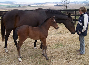 Maximum Break with her Ideal World filly and manager Annie Woodham at St Helier Stud. Image: St Helier Stud