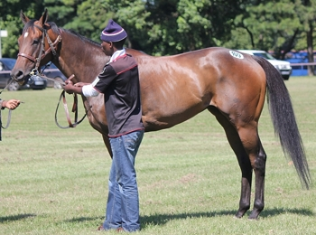 Michael Holmes Shongweni Horses-In-Training Sale Results