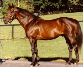 Mr Prospector at Stud