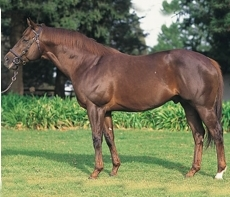 Muhtafal to stand at Spring Valley Stud