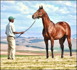 First Winner For Sire Mullins Bay