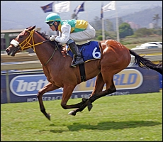 Nips Nugget powering home to victory. Image: Gold Circle